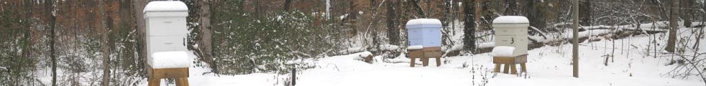 Winter Aviary - January 2011